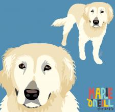 marie oneill brisbane illustrator illustrated pet portraits dog portraist-02