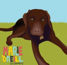 marie oneill brisbane illustrator pet portraits-02